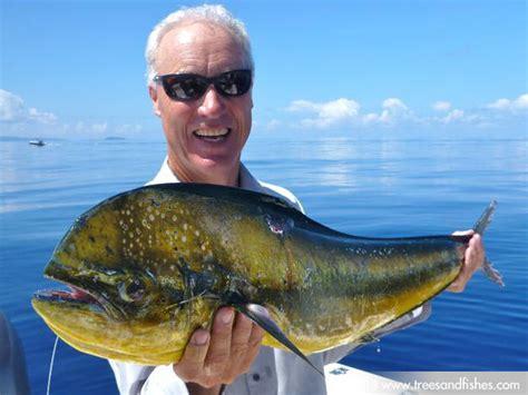 mahi mahi images mahi mahi fish images