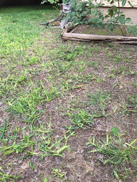 backyard full of weeds where to start on my yard full of weeds the home