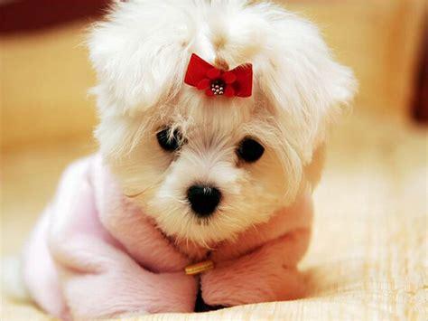 imagenes tiernas de perritos descargar imagenes de perritos tiernos gratis imagui