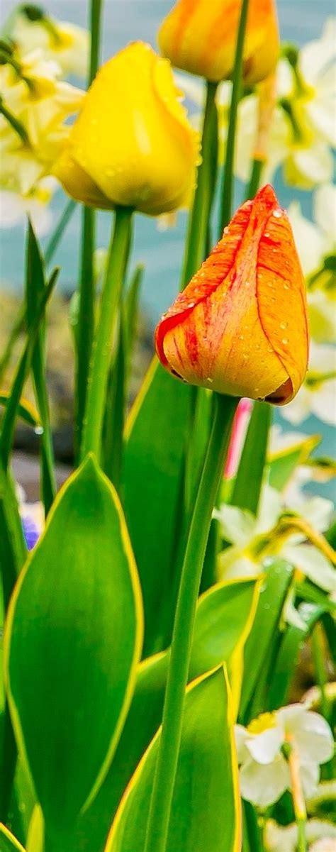 Geneva Flowers 2 60 best flowers images on beautiful flowers