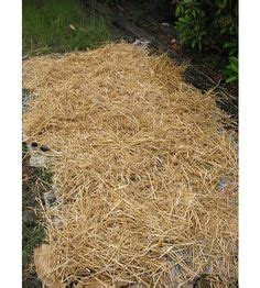 was heißt mulchen 5330 free gardening with newspaper and straw mulch i need