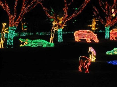 zoo lights wi conversations and some zoo lights national