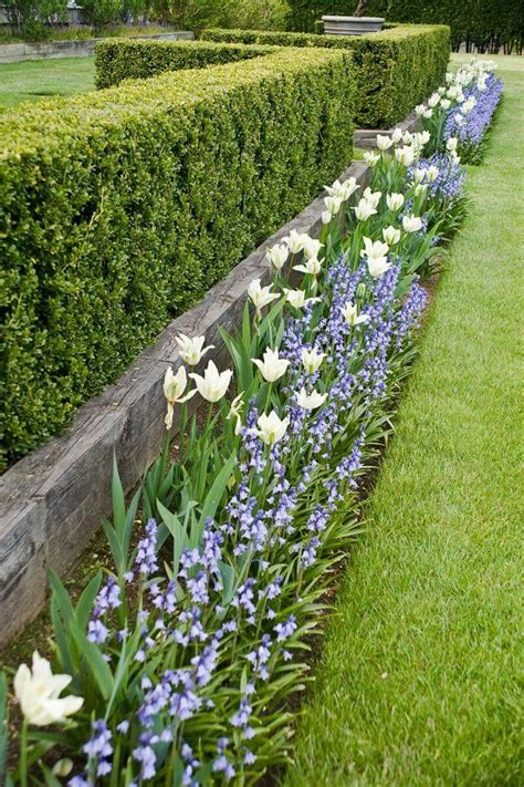 hedging ideas for gardens garden hedges myrtle st ideas garden hedges gardens and garden ideas