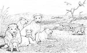 coloriage troupe lions hy 232 nes coloriages 224 imprimer gratuits