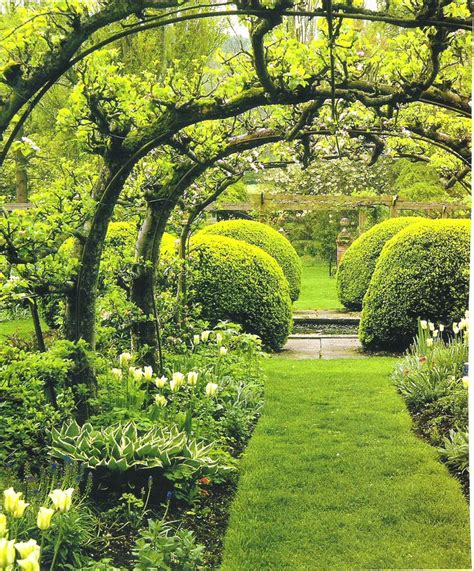 Garden Arch For Grapes Espalier Apple Tree Arch Espalier