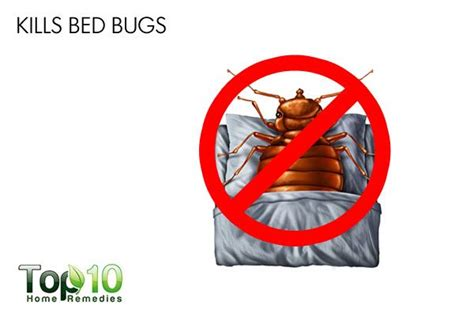 what kills bed bugs for good 10 interesting uses of food grade diatomaceous earth page 3 of 3 top 10 home remedies
