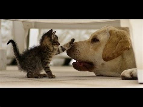 cat and puppy best and cat