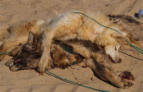 dead puppy inside dead dogs picture ebaum s world