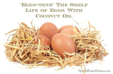 How To Extend Shelf Of Food by How To Extend The Shelf Of Eggs With Coconut