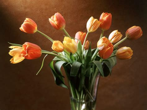 vasi di fiori immagini raccolta immagini e foto di paesaggi natura panorama e