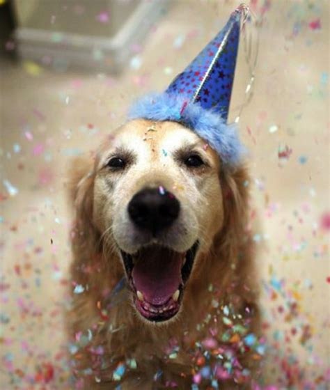 birthday dogs 23 birthday dogs at their dogs tips advice me