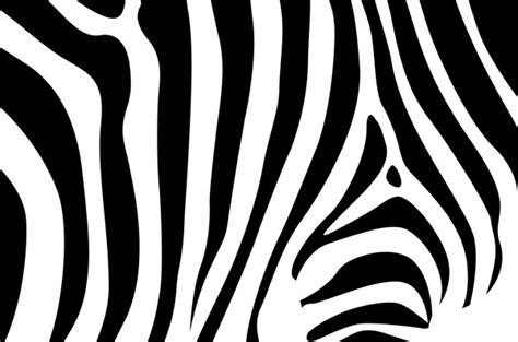 zebra pattern psd zebra pattern background vector material my free