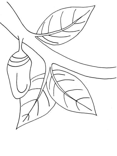 Monarch Butterfly Chrysalis Coloring Book Page Chrysalis Coloring Pages