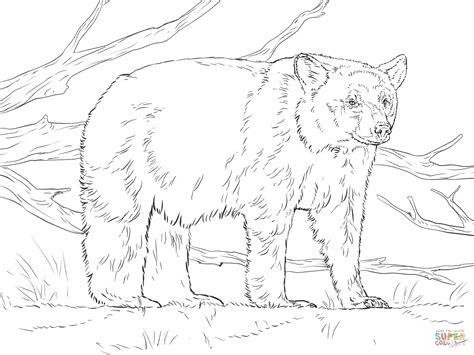 coloring pages black bear realistic american black bear coloring page free