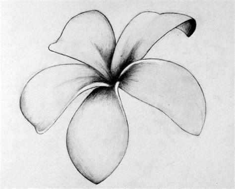 frangipani tattoos designs free 172 best plumeria images on ideas