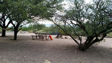 Roper Lake State Park Cabins by Wildlife Picture Of Roper Lake State Park Safford