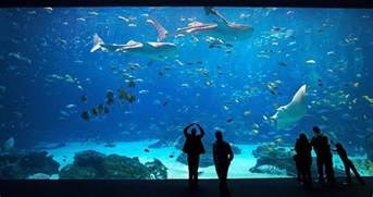 The Aquarium How To Go On An Aquarium Date Welovedates