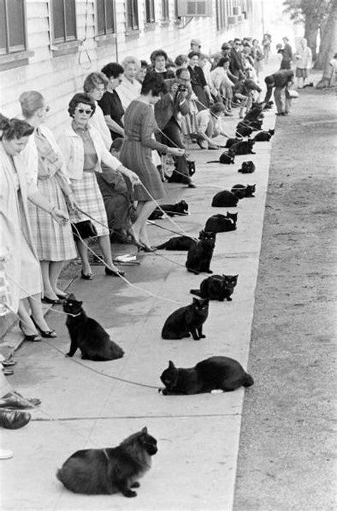 Studio call for a black cat | Gatos loucos, Filhotes de