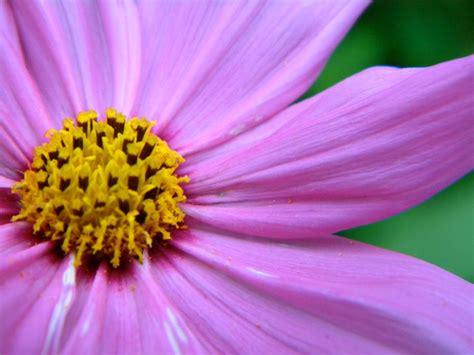 zoom flower  daraynuh  deviantart