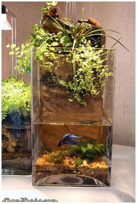 shamwerks paludarium mini plants planted aquarium