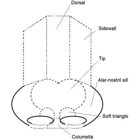 labelled diagram of the nose file rhinoplasty nose diagram nasal subunits labelled jpg