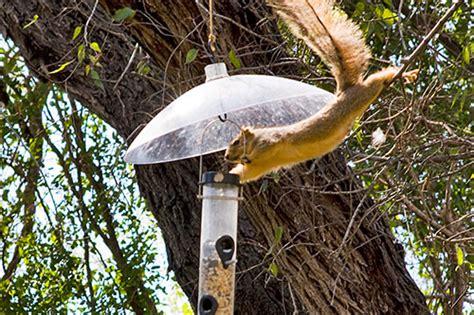 Squirrel Catapult Bird Feeder niamhfitzgerald streak club