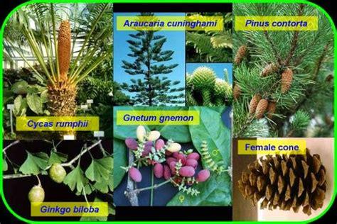 contoh tumbuhan berbiji terbuka dan tertutup