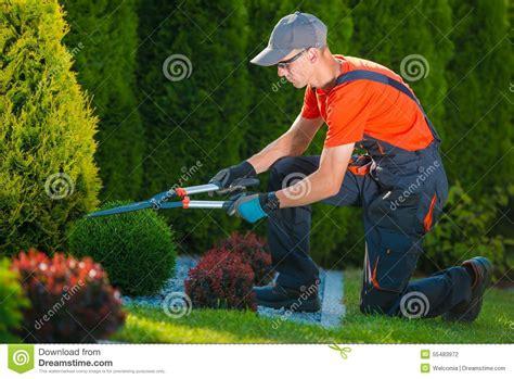 imagenes graciosas de jardineros jardinero profesional en el trabajo foto de archivo