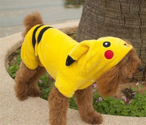 pikachu puppy win a pikachu doggie sweater or 20 or paypal funfall4furryfriends