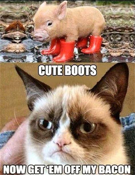 10 Funniest Cat Photos by 10 Grumpy Cat Memes
