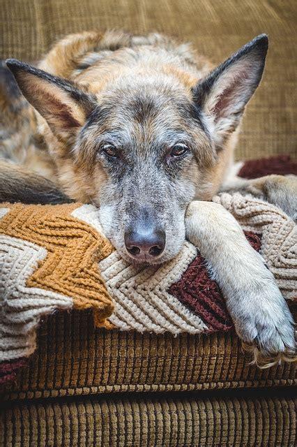 alimentazione cani anziani alimentazione anziano dieta anziano