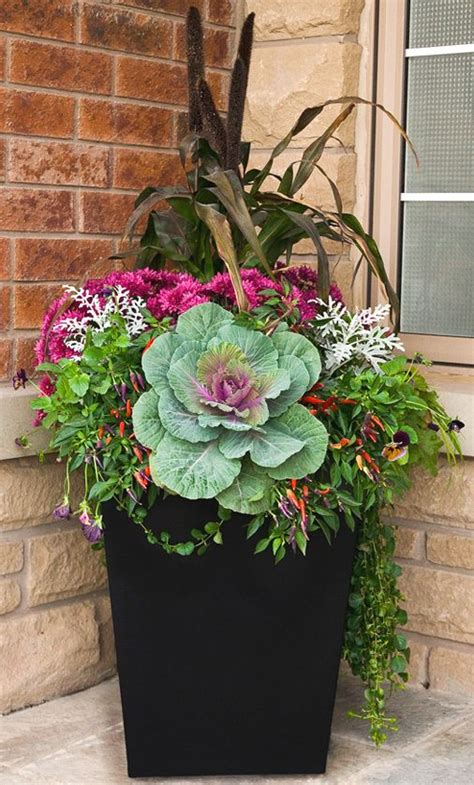 Fall Container Gardening Flowers Ornamental Cabbage Buy Garden Flowers