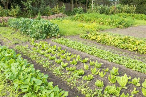Crop Rotation Vegetable Garden Crop Rotation The Four Year Crop Rotation Plan