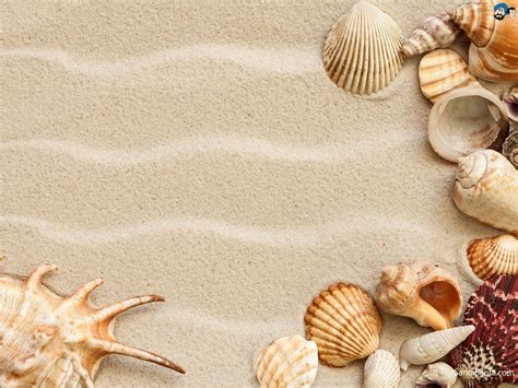 seashell wallpapers wallpaper cave