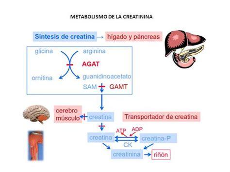 creatinina alta dieta alimentare creatinina alta related keywords keywordfree