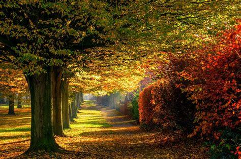 trees landscape wallpaper  smart pnone road autumn