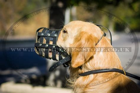 golden retriever muzzle golden retriever muzzle size leather muzzle 163 28 71
