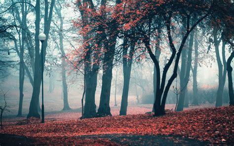 autumn park trees leaves wallpapers autumn park trees