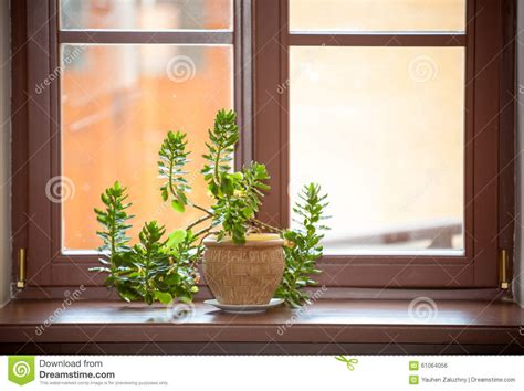 Plants For Window Sills Flowers Stock Photo Image Of Green Sill Hobby