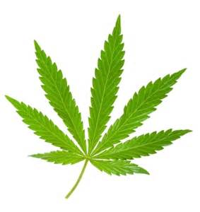 How to draw a pot leaf image search results image apps directories
