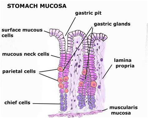 color of stomach acid stomach acid color of stomach acid