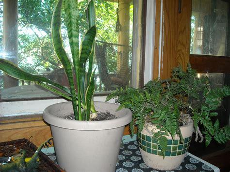 indoor plants  east facing windows garden