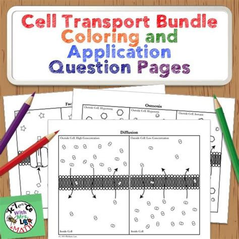 cell transport coloring activities bundle aulinhas aulas