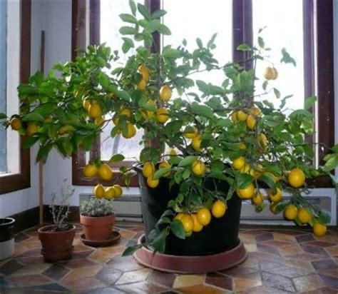 hydroponics indoor garden