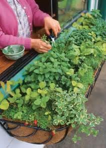 Growing Herbs In Kitchen Window Growing Herbs In Windowboxes Vegetable Gardener