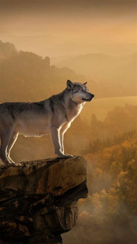 wallpaper wolf rocks forest foggy  animals