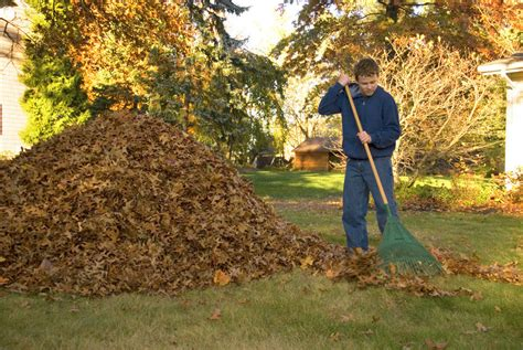 Landscape Rake Leaves The Complete Guide To Raking Autumn Leaves Ebay