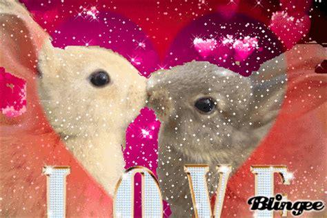 imagenes gif enamorados conejitos enamorados fotograf 237 a 131996068 blingee com