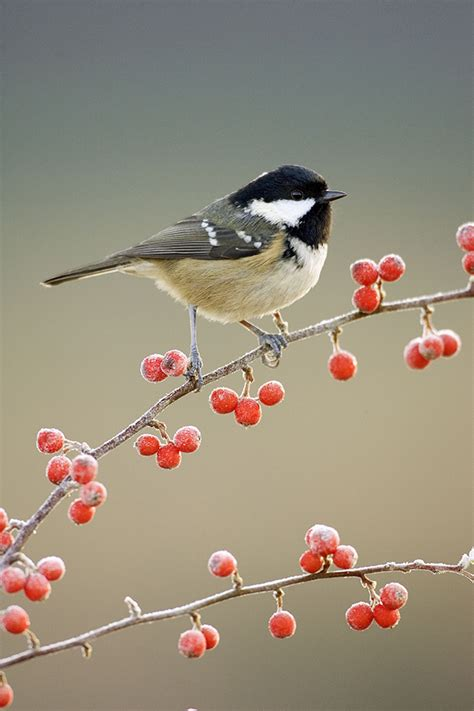 top tips for feeding birds in winter a how to guide