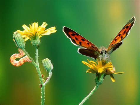 kupu kupu cantik animal planet